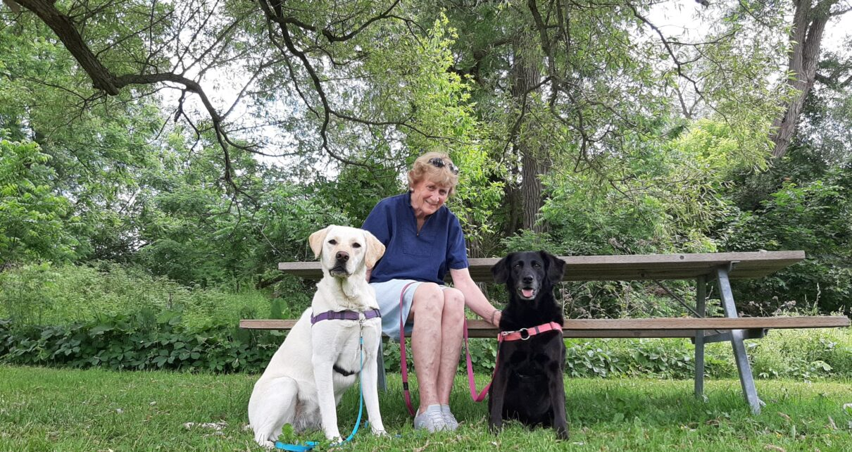 New Hamburg resident Phyllis Wood in William Scott Park, with her labs Katie and Chelsea. (Photo Nigel Gordijk)